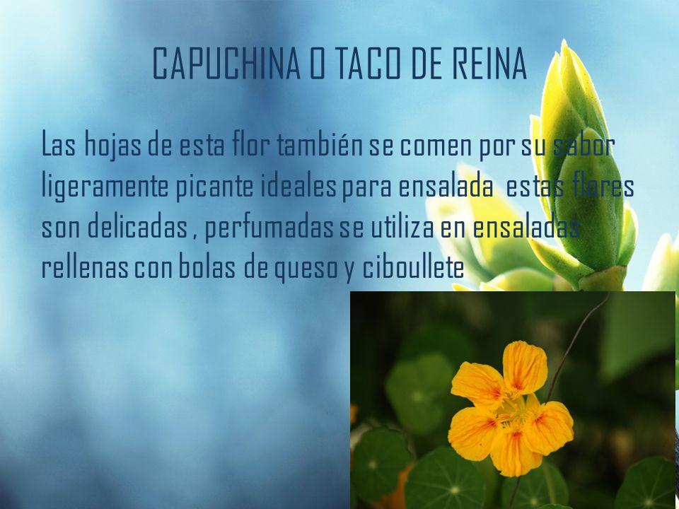 CAPUCHINA O TACO DE REINA