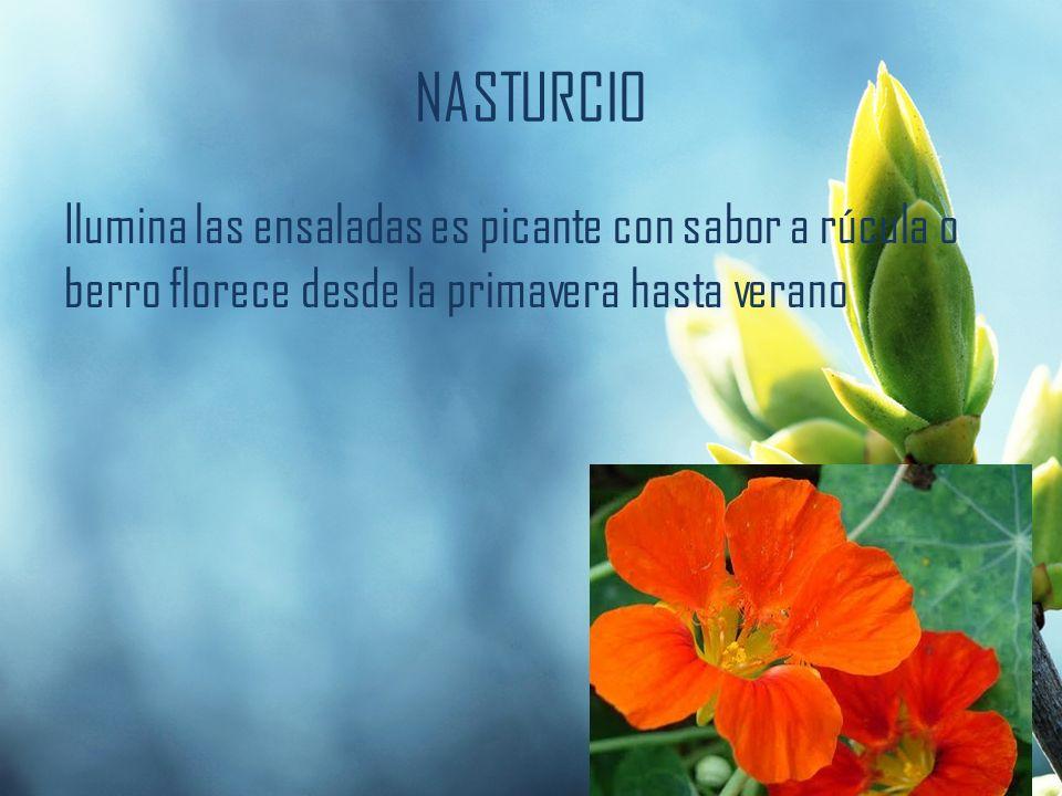 NASTURCIO Ilumina las ensaladas es picante con sabor a rúcula o berro florece desde la primavera hasta verano.