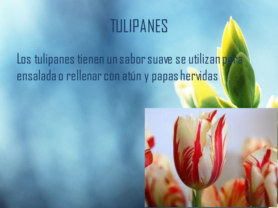 TULIPANES Los tulipanes tienen un sabor suave se utilizan para ensalada o rellenar con atún y papas hervidas.