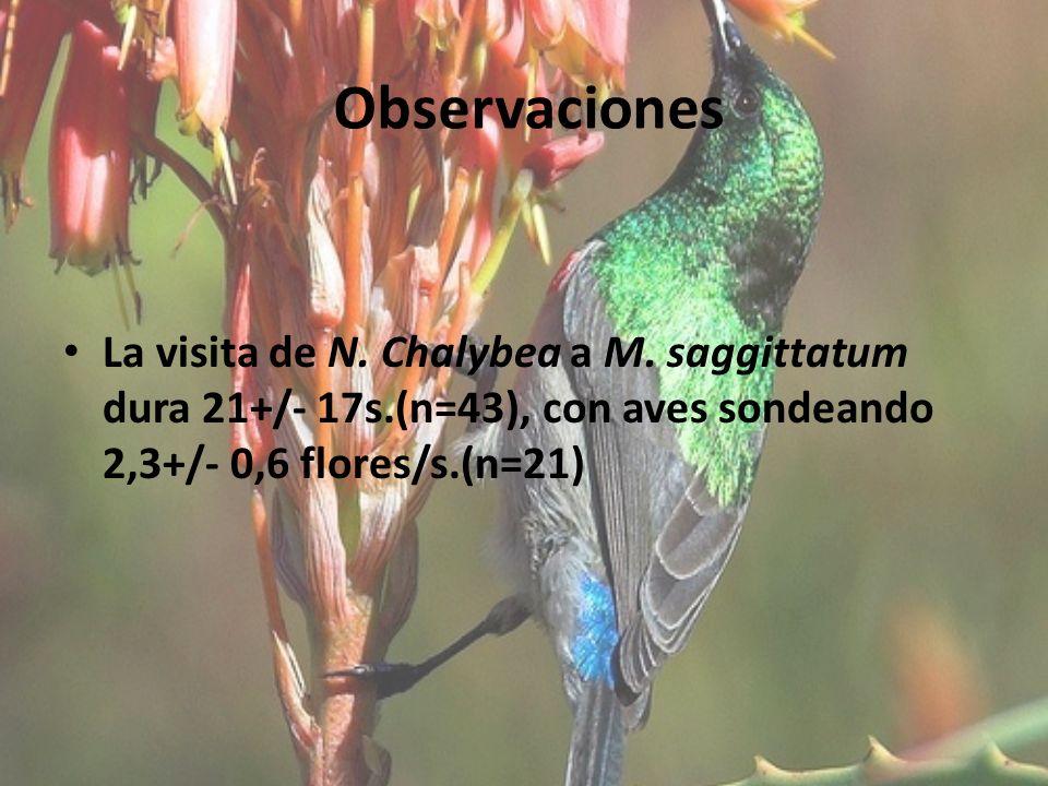 Observaciones La visita de N. Chalybea a M.
