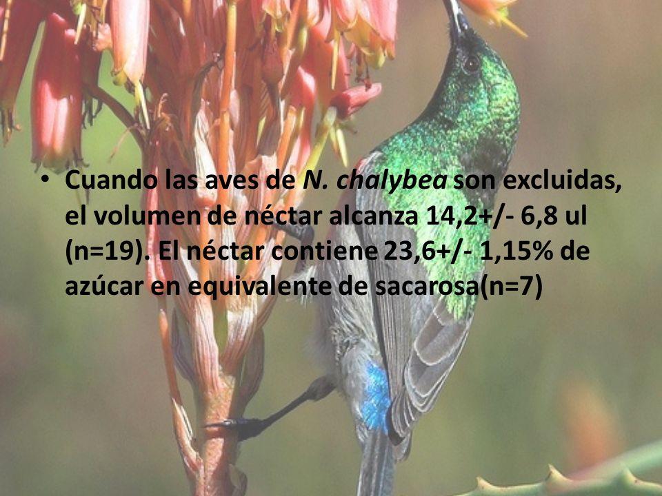 Cuando las aves de N. chalybea son excluidas, el volumen de néctar alcanza 14,2+/- 6,8 ul (n=19).