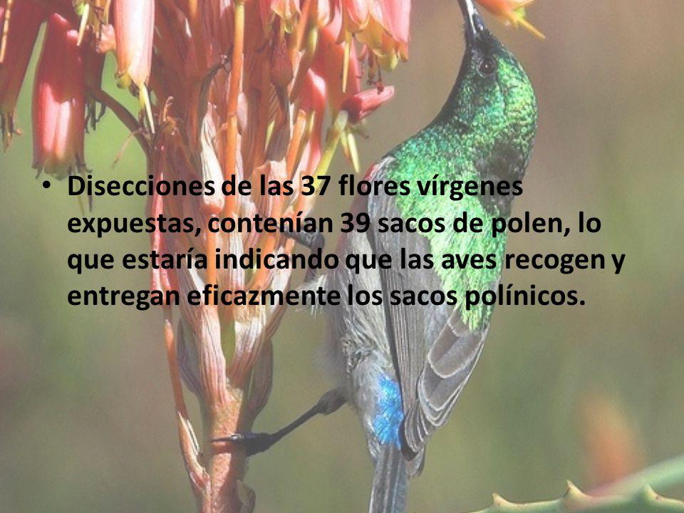 Disecciones de las 37 flores vírgenes expuestas, contenían 39 sacos de polen, lo que estaría indicando que las aves recogen y entregan eficazmente los sacos polínicos.