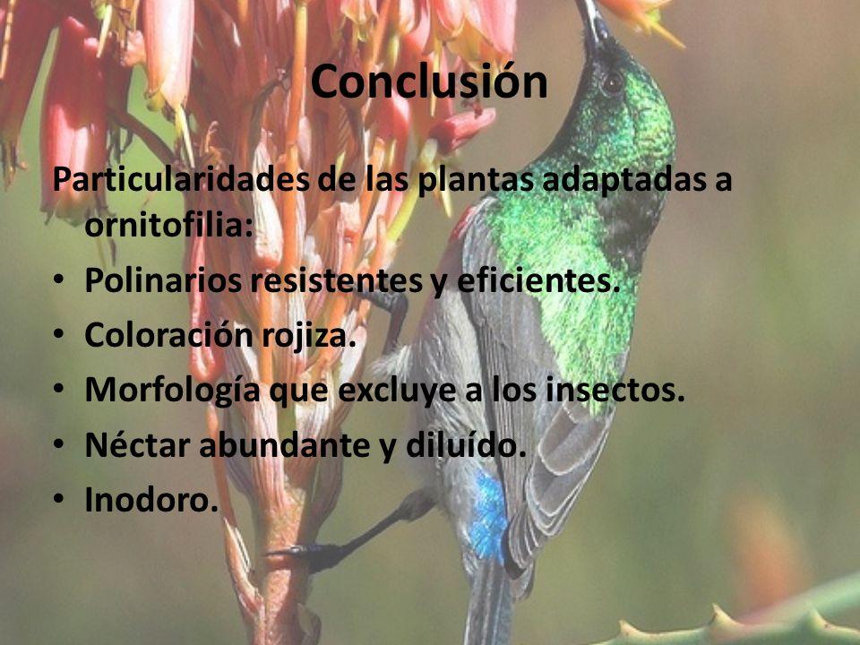 Conclusión Particularidades de las plantas adaptadas a ornitofilia:
