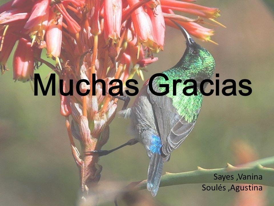 Muchas Gracias Sayes ,Vanina Soulés ,Agustina