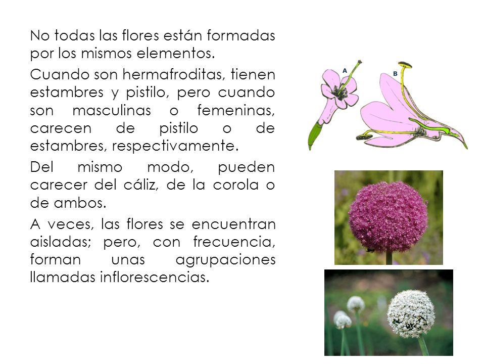 No todas las flores están formadas por los mismos elementos.