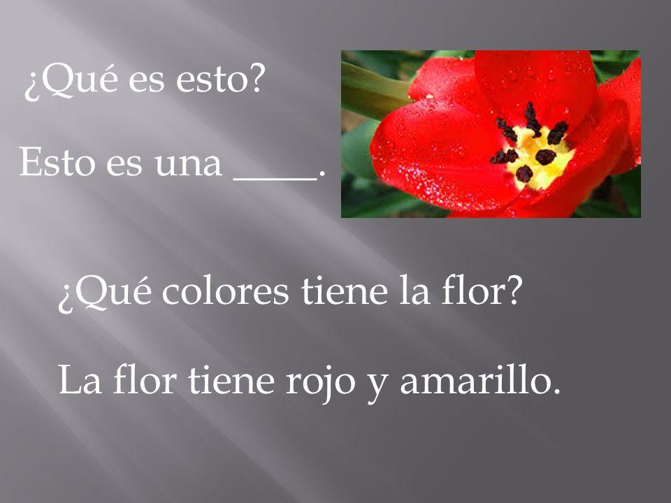 ¿Qué es esto Esto es una ____. ¿Qué colores tiene la flor La flor tiene rojo y amarillo.