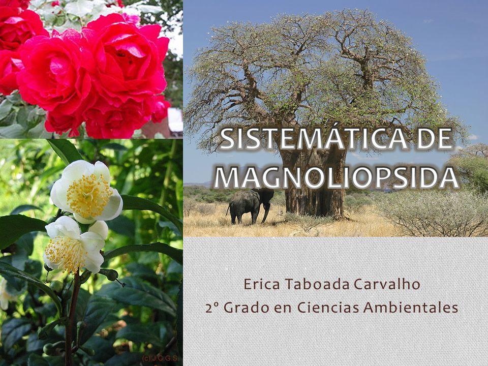SISTEMÁTICA DE MAGNOLIOPSIDA