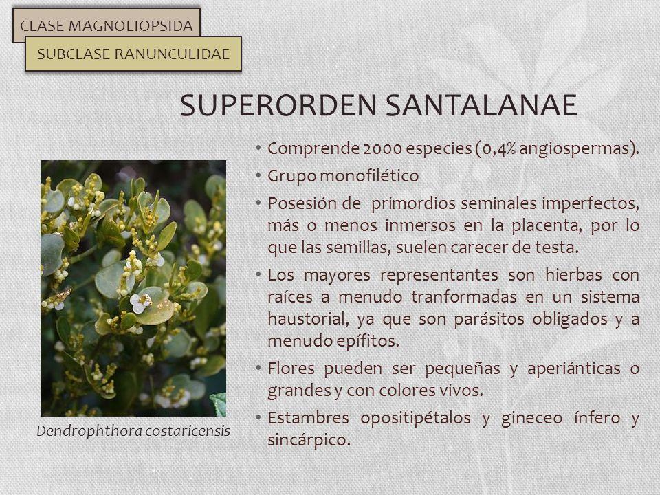 SUPERORDEN SANTALANAE