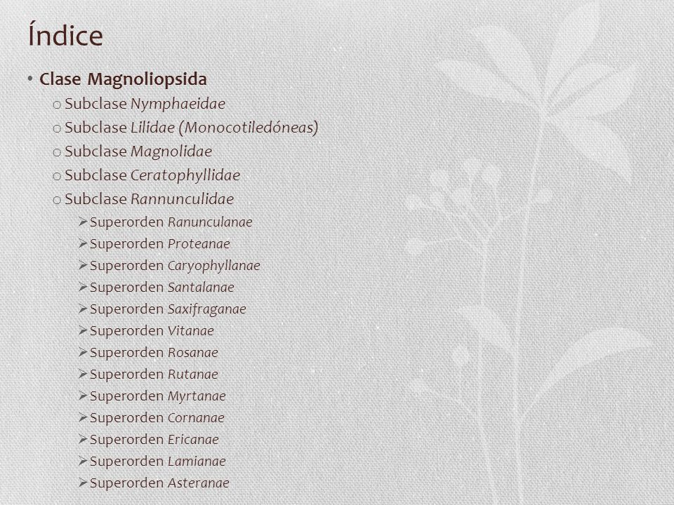 Índice Clase Magnoliopsida Subclase Nymphaeidae