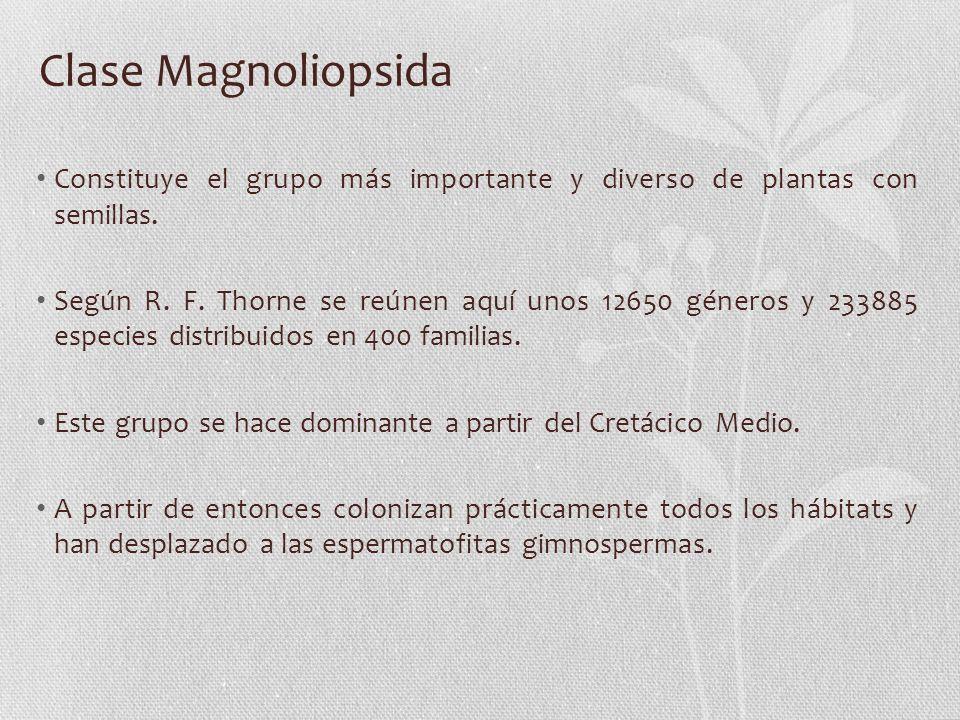 Clase Magnoliopsida Constituye el grupo más importante y diverso de plantas con semillas.