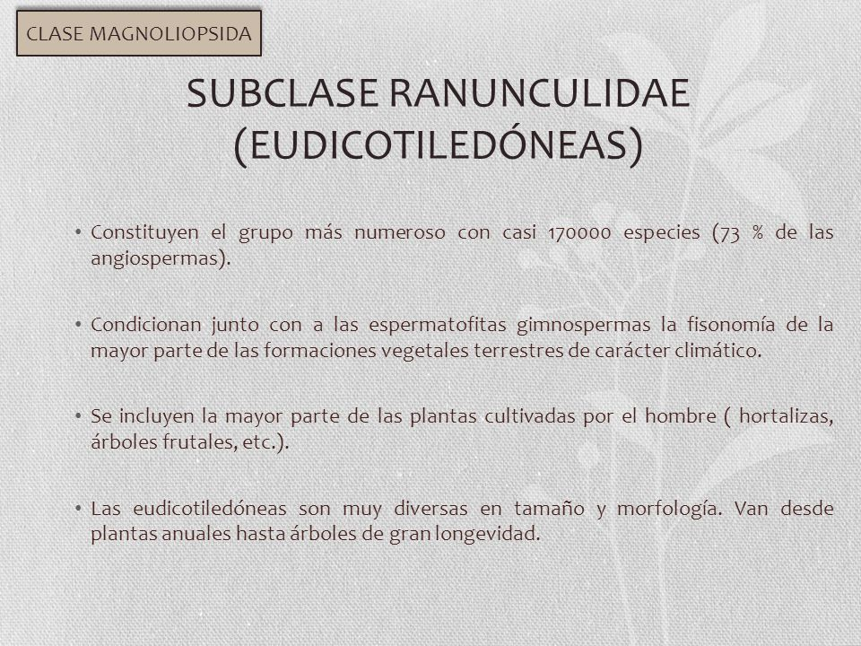 SUBCLASE RANUNCULIDAE (EUDICOTILEDÓNEAS)