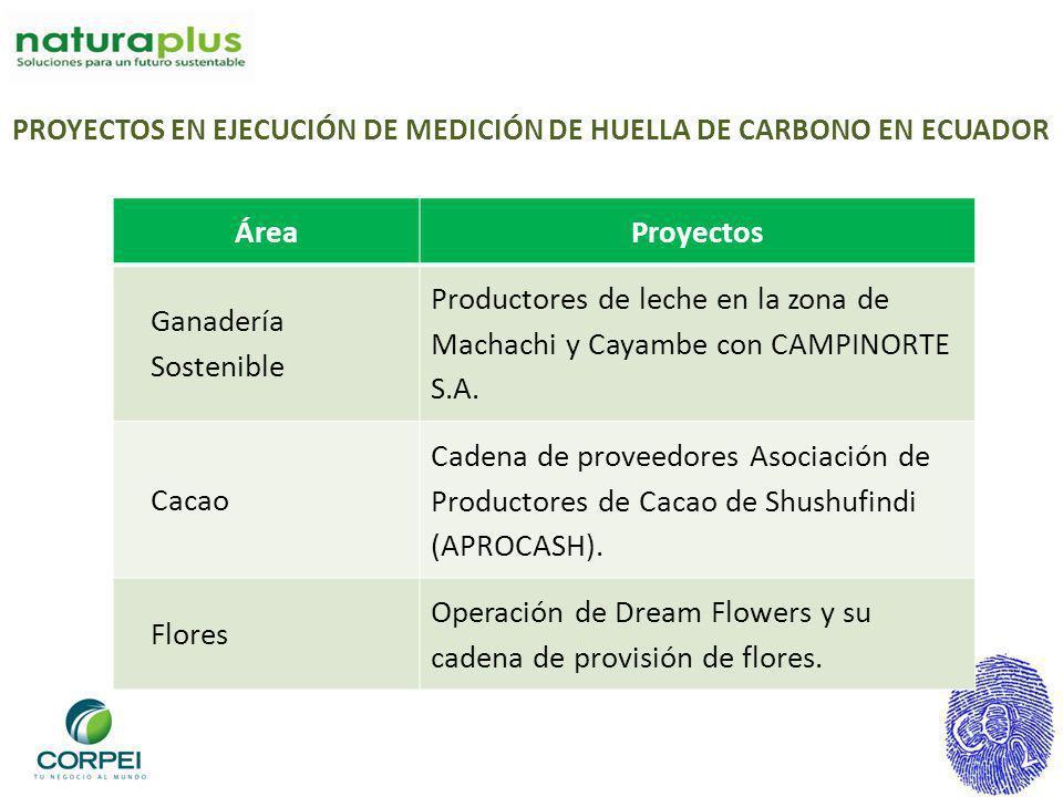 Operación de Dream Flowers y su cadena de provisión de flores.