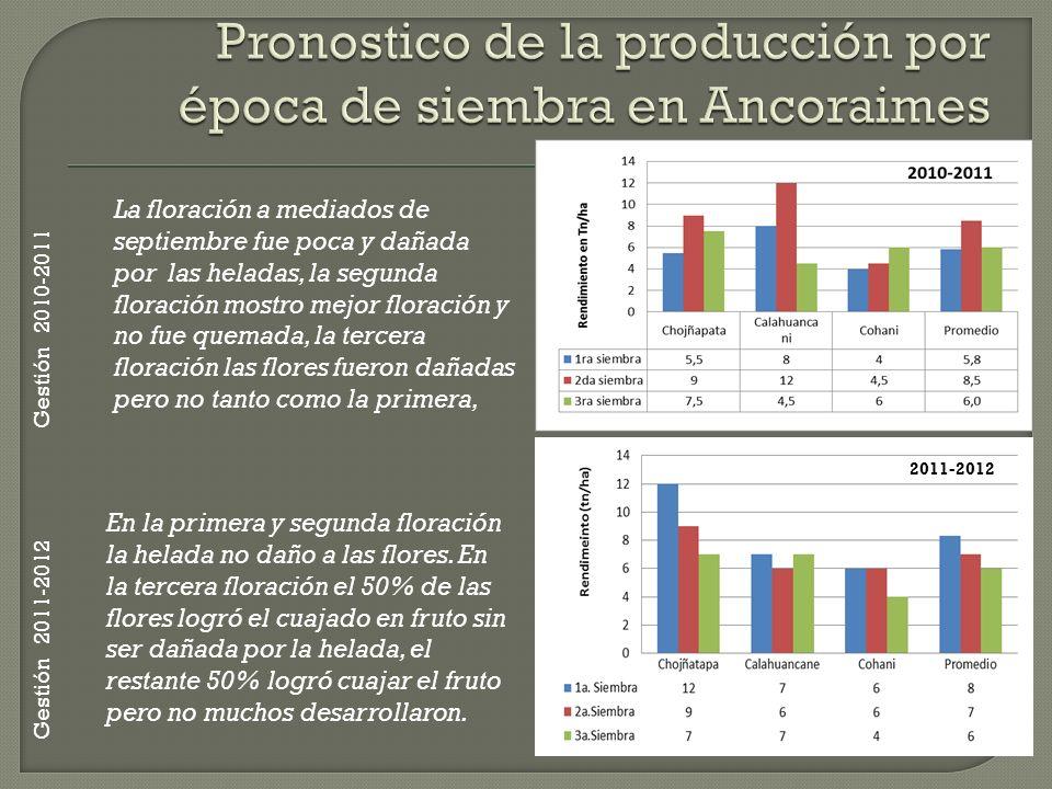 Pronostico de la producción por época de siembra en Ancoraimes