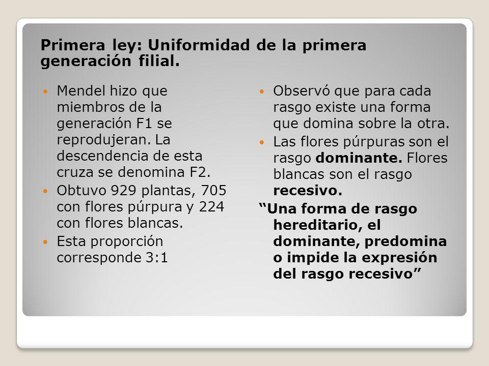Primera ley: Uniformidad de la primera generación filial.