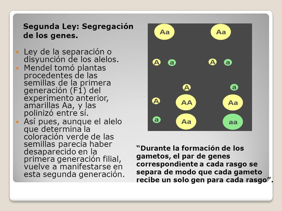 Ley de la separación o disyunción de los alelos.
