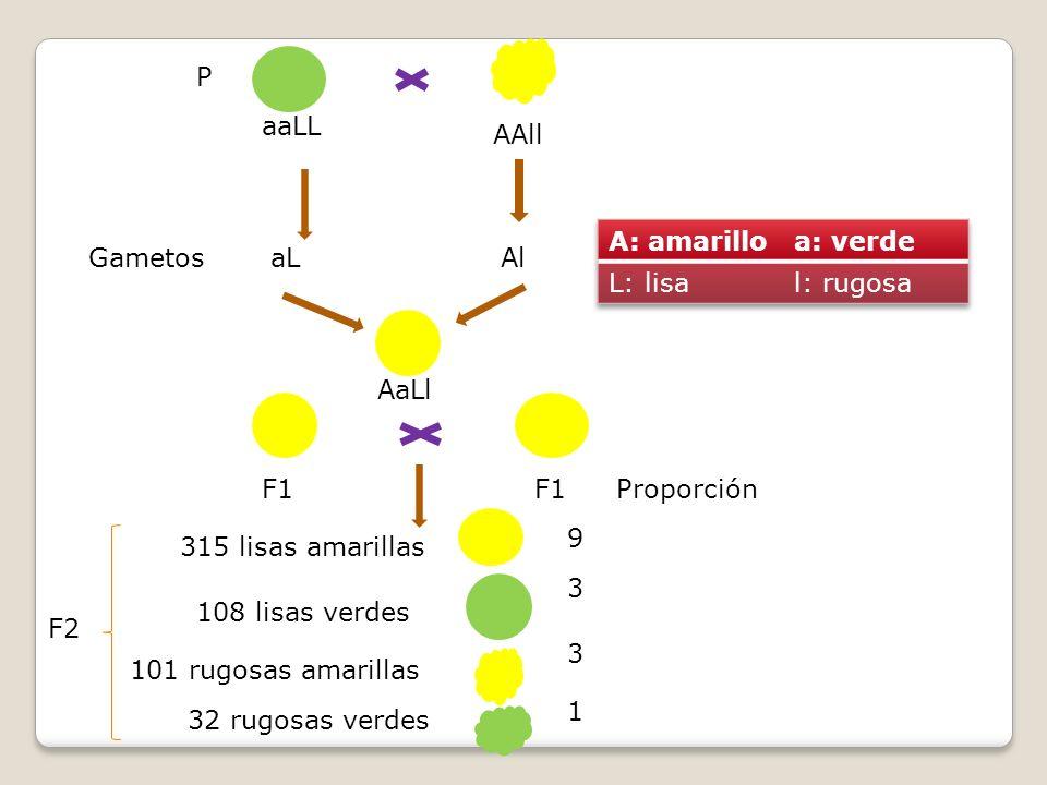 P aaLL. AAll. A: amarillo. a: verde. L: lisa. l: rugosa. Gametos. aL. Al. AaLl. F1. F1. Proporción.