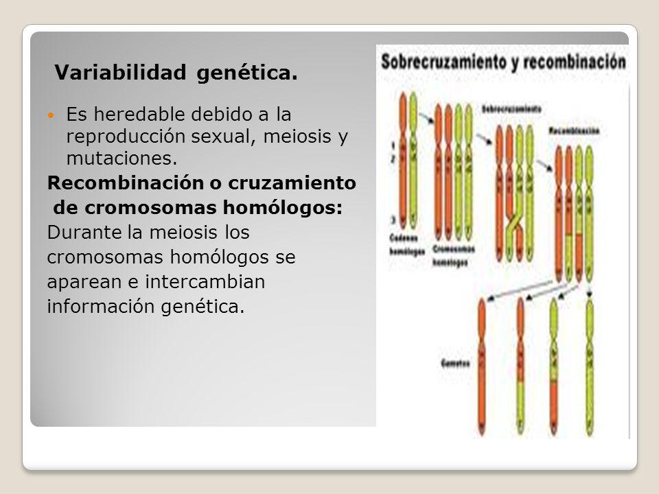 Variabilidad genética.