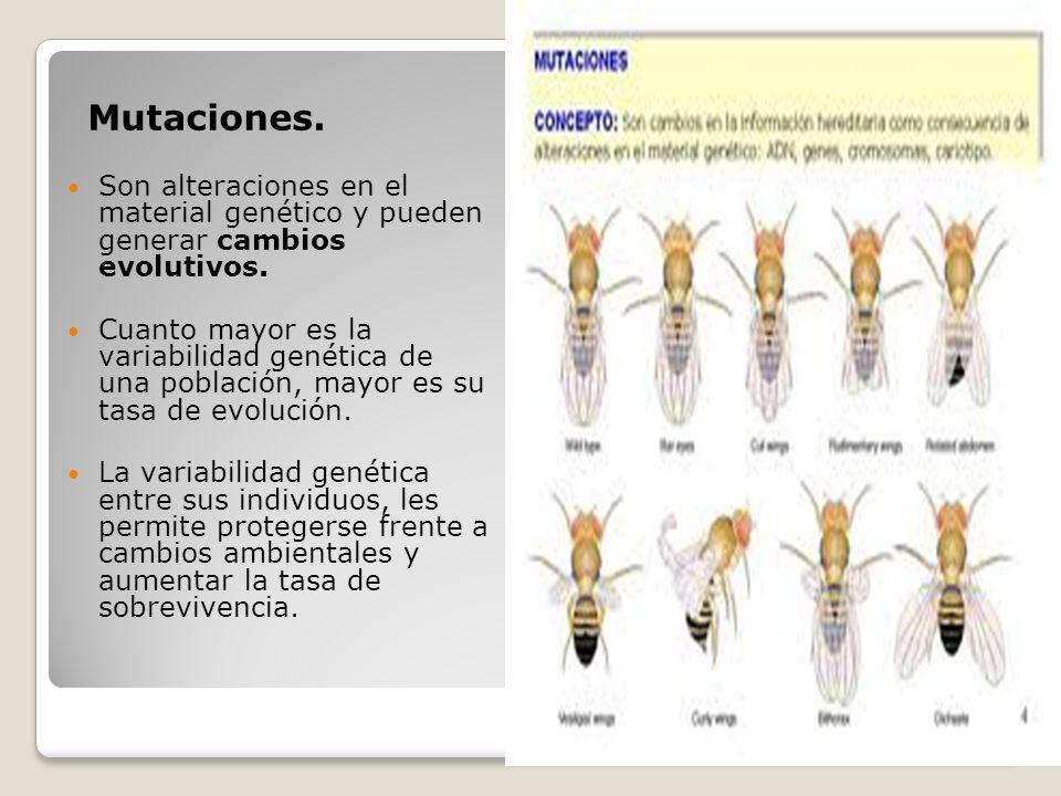 Mutaciones. Son alteraciones en el material genético y pueden generar cambios evolutivos.