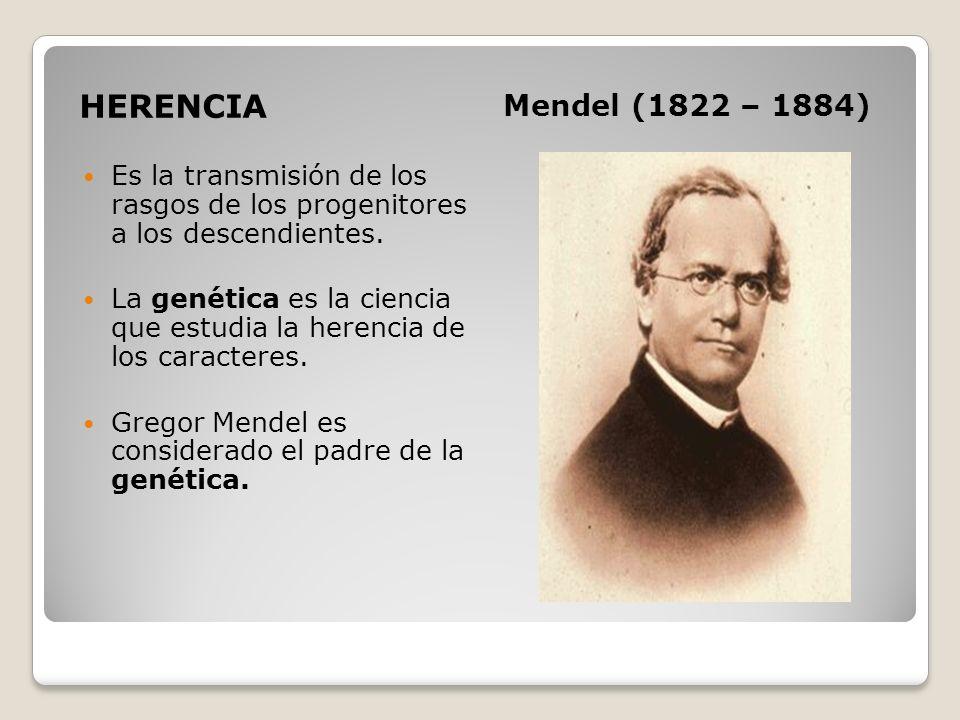 HERENCIA Mendel (1822 – 1884) Es la transmisión de los rasgos de los progenitores a los descendientes.