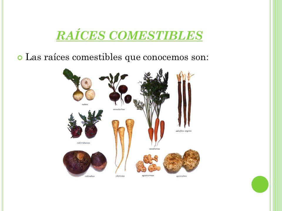 RAÍCES COMESTIBLES Las raíces comestibles que conocemos son: