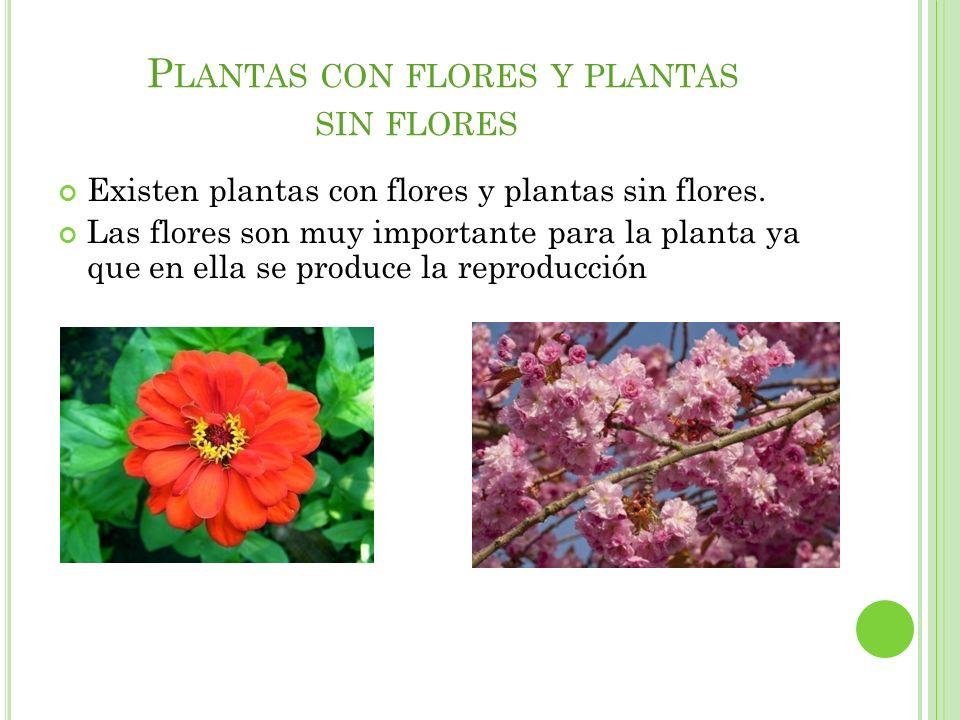 Plantas con flores y plantas sin flores