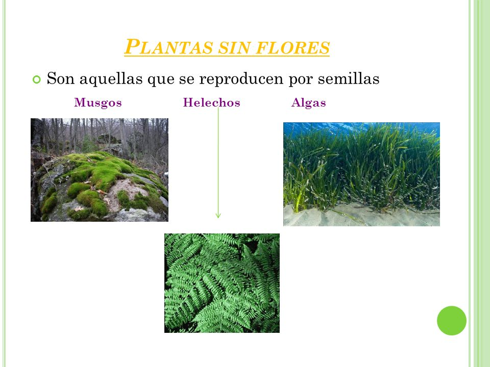 Seres vivos las plantas ppt video online descargar for Plantas sin semillas