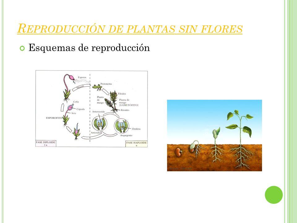 Reproducción de plantas sin flores