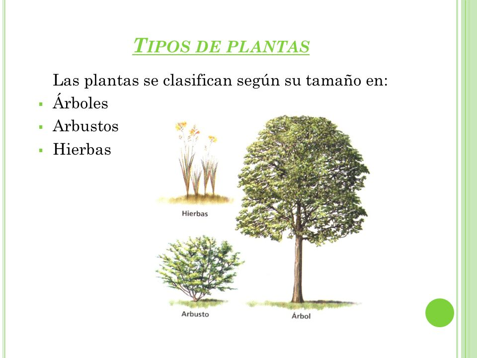 seres vivos las plantas ppt video online descargar