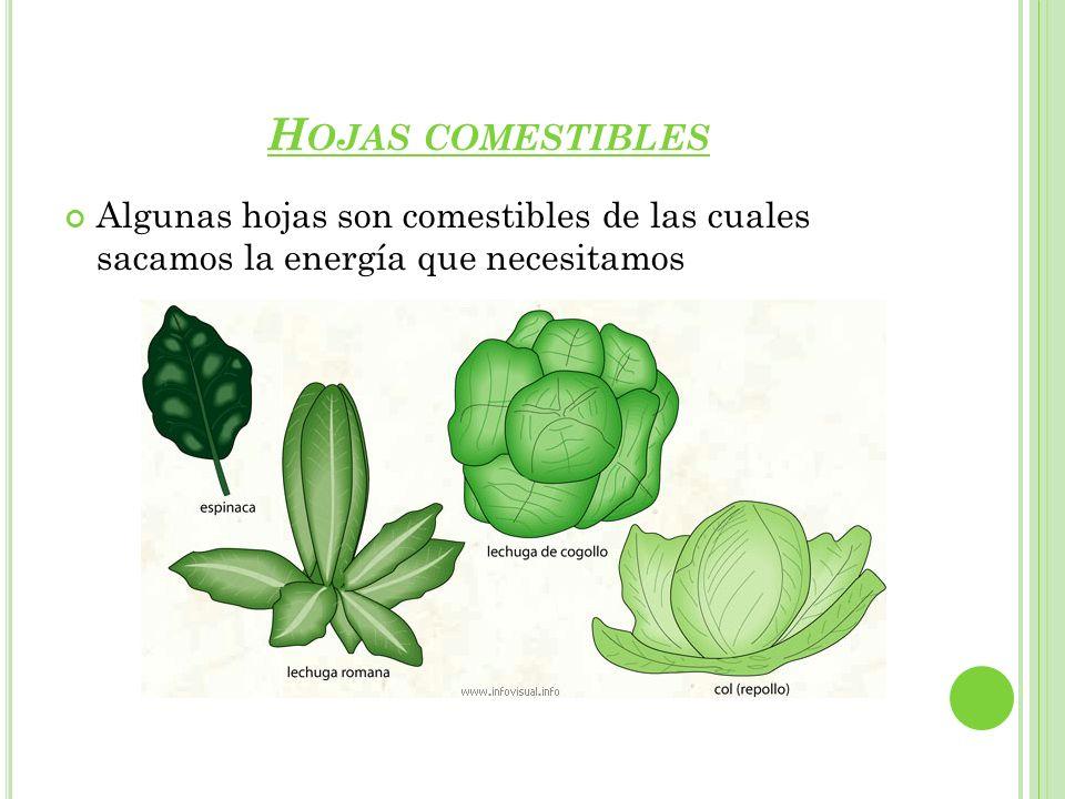 Hojas comestibles Algunas hojas son comestibles de las cuales sacamos la energía que necesitamos