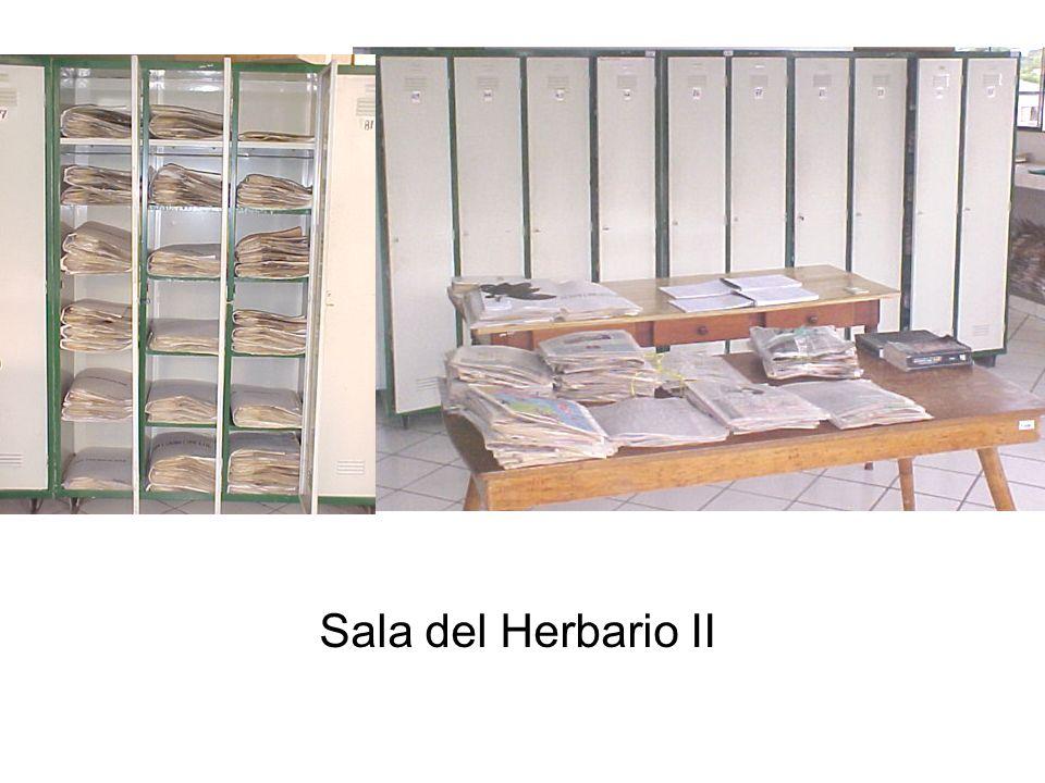Sala del Herbario II