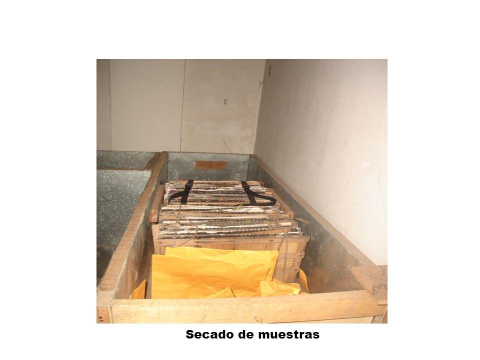 Secado de muestras