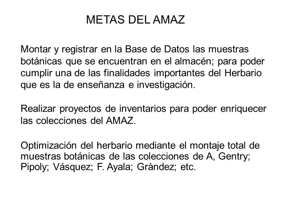 METAS DEL AMAZ