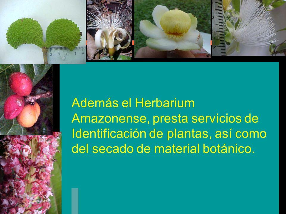 Además el Herbarium Amazonense, presta servicios de Identificación de plantas, así como del secado de material botánico.