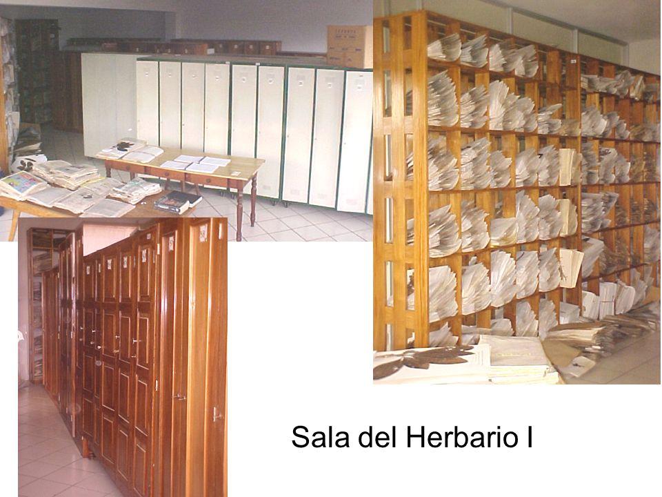 Sala del Herbario I