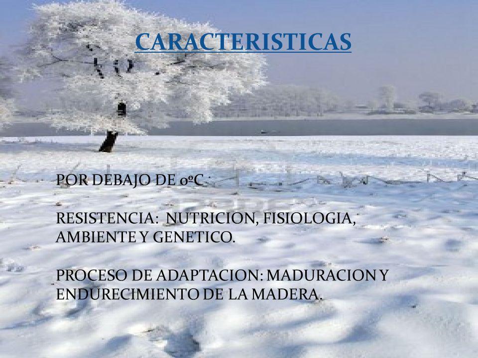 CARACTERISTICAS POR DEBAJO DE 0ºC