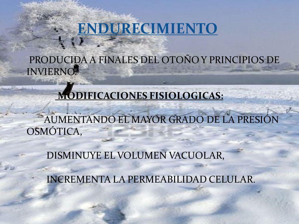 ENDURECIMIENTO PRODUCIDA A FINALES DEL OTOÑO Y PRINCIPIOS DE INVIERNO.