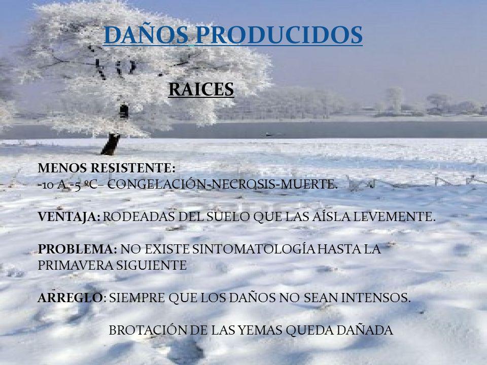 DAÑOS PRODUCIDOS RAICES MENOS RESISTENTE: