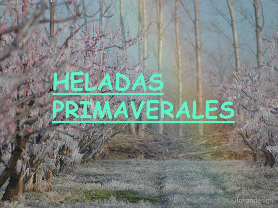 HELADAS PRIMAVERALES