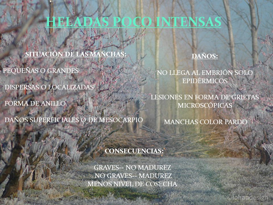 HELADAS POCO INTENSAS SITUACIÓN DE LAS MANCHAS: DAÑOS: