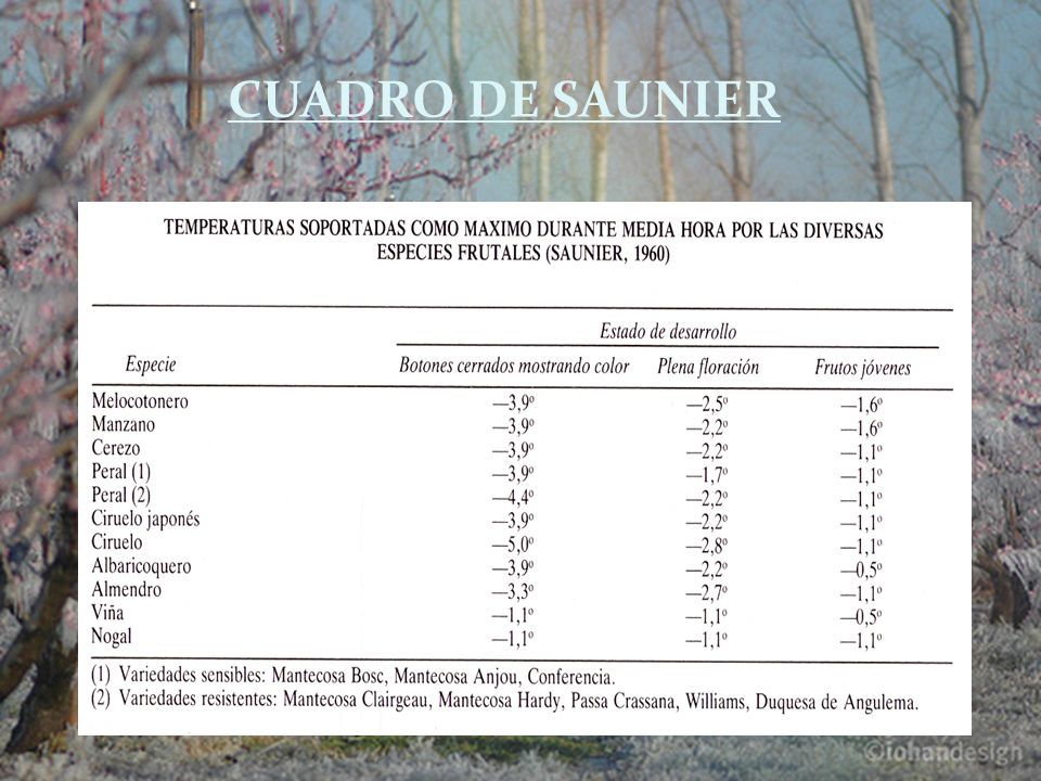 CUADRO DE SAUNIER