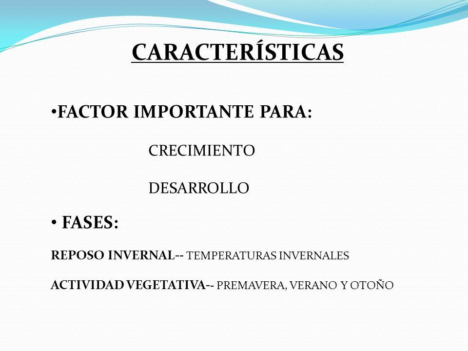 CARACTERÍSTICAS FACTOR IMPORTANTE PARA: FASES: CRECIMIENTO DESARROLLO
