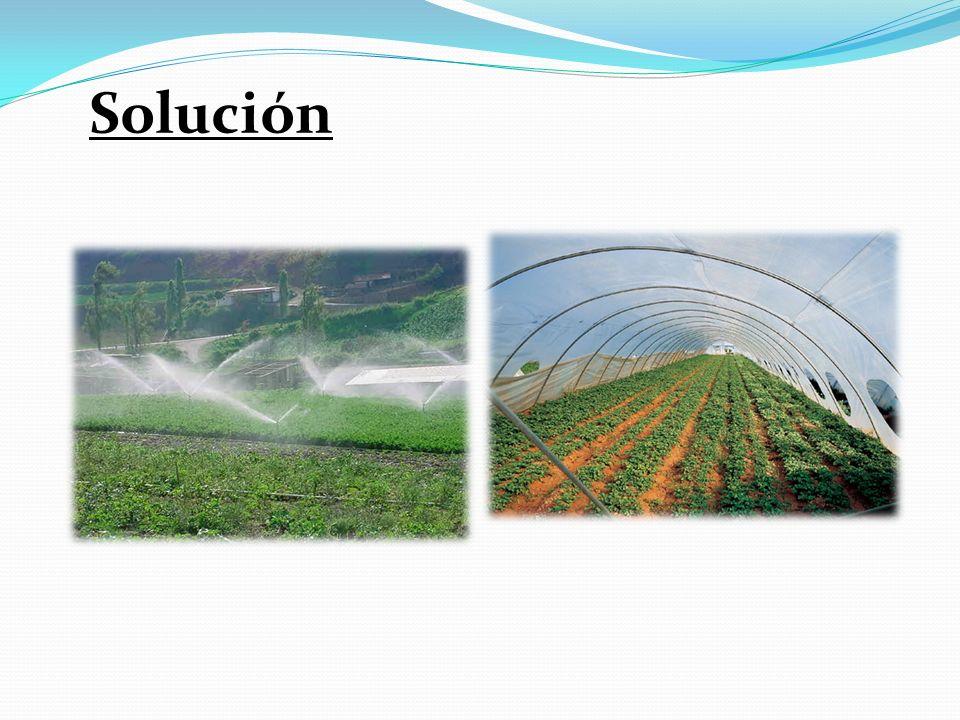 Solución Hay que buscar especies adecuadas, controlar el riego, o el uso de invernaderos.