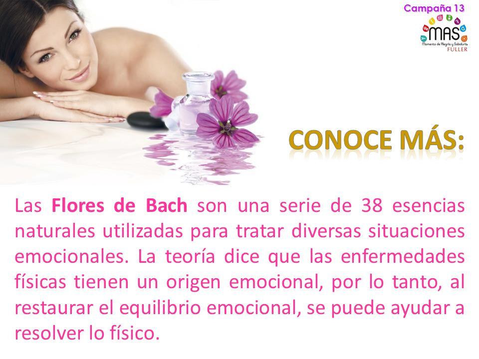 Campaña 13 CONOCE MÁS: