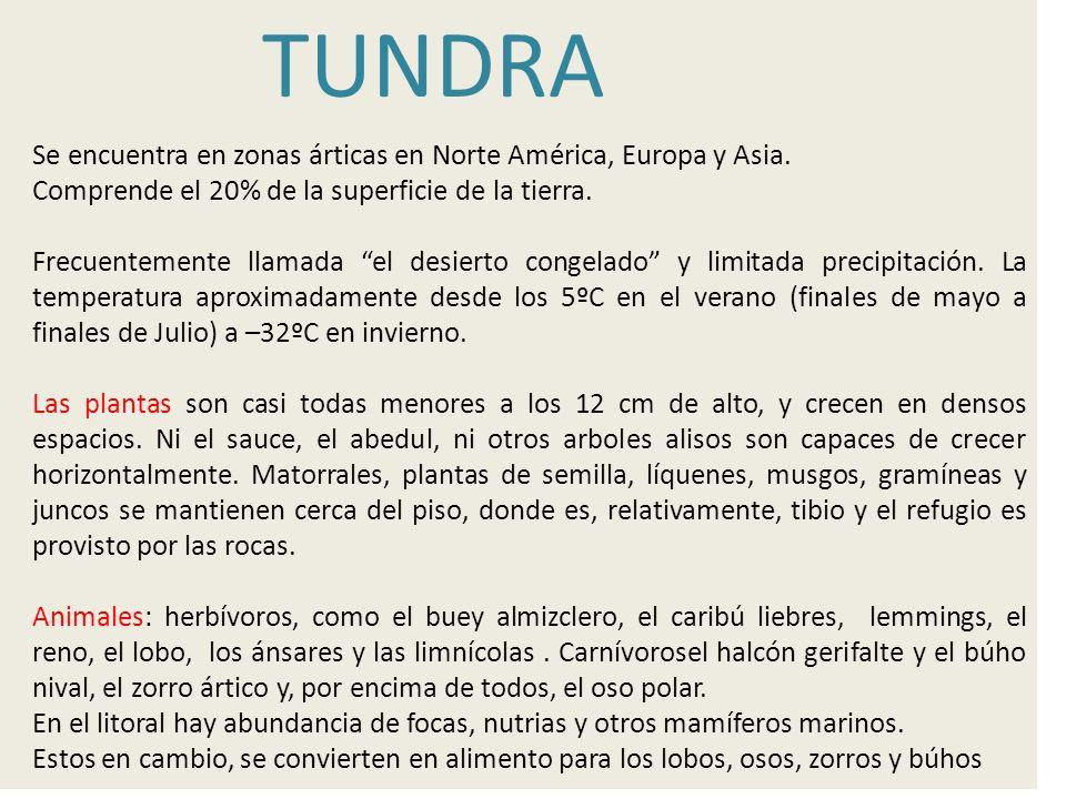 TUNDRA Se encuentra en zonas árticas en Norte América, Europa y Asia.