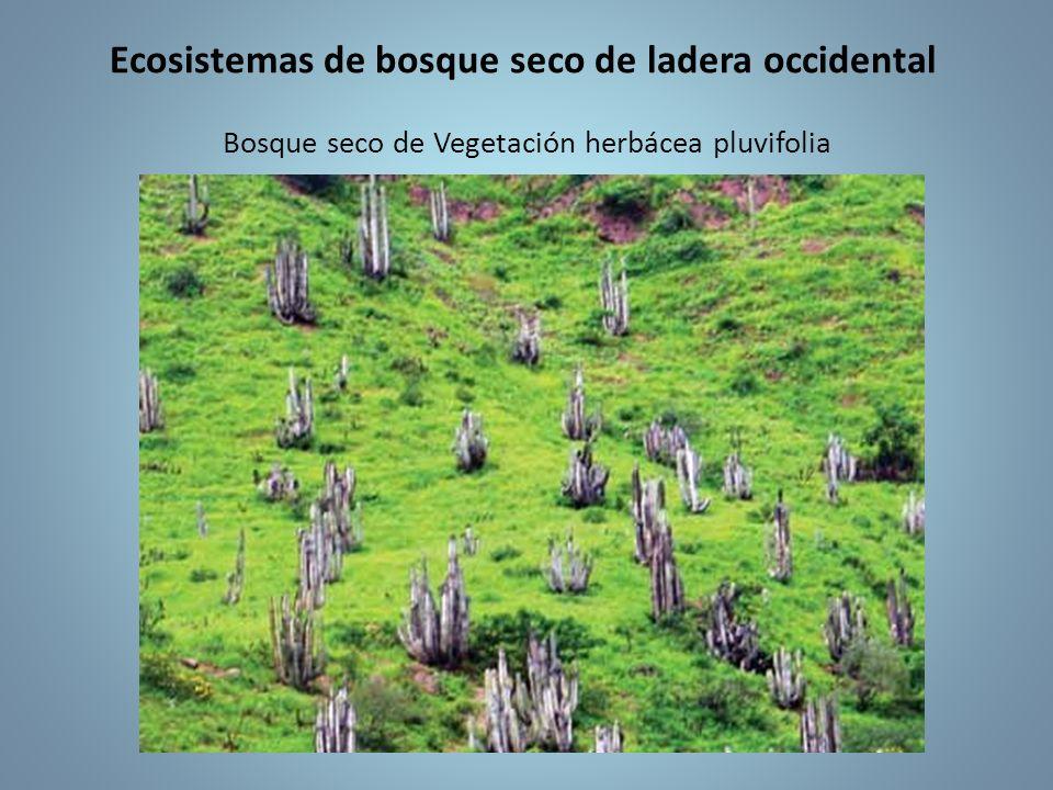 Ecosistemas de bosque seco de ladera occidental Bosque seco de Vegetación herbácea pluvifolia