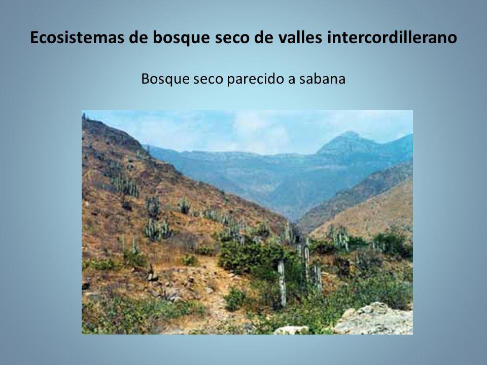 Ecosistemas de bosque seco de valles intercordillerano Bosque seco parecido a sabana