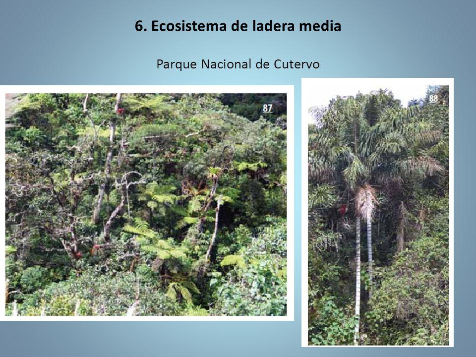 6. Ecosistema de ladera media Parque Nacional de Cutervo