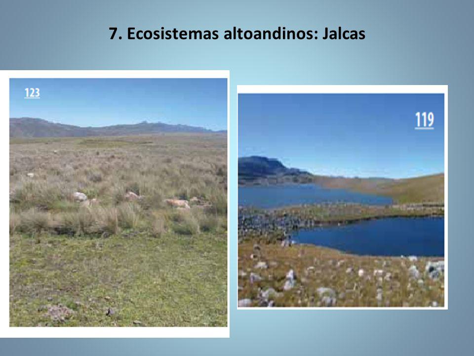 7. Ecosistemas altoandinos: Jalcas