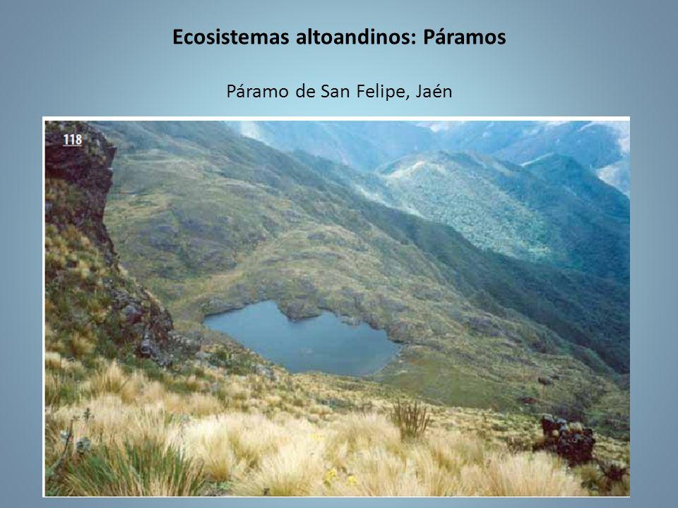 Ecosistemas altoandinos: Páramos Páramo de San Felipe, Jaén