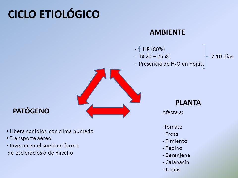 CICLO ETIOLÓGICO AMBIENTE PLANTA PATÓGENO HR (80%)